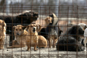 Legano/Ilegalna trgovina napuštenih životinja?