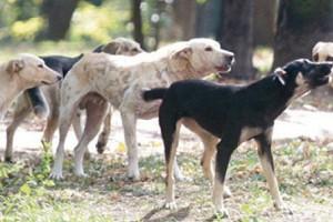 Blog: Dobrobit životinja ili kako je to kod nas…
