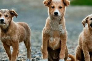 Blog: Analiza dosadašnje primene Zakona o dobrobiti životinja
