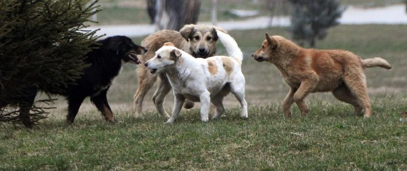 Zelena stranka protiv ubijanja pasa