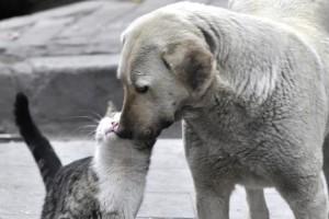 Blog: 4. april – Svetski dan napuštenih životinja