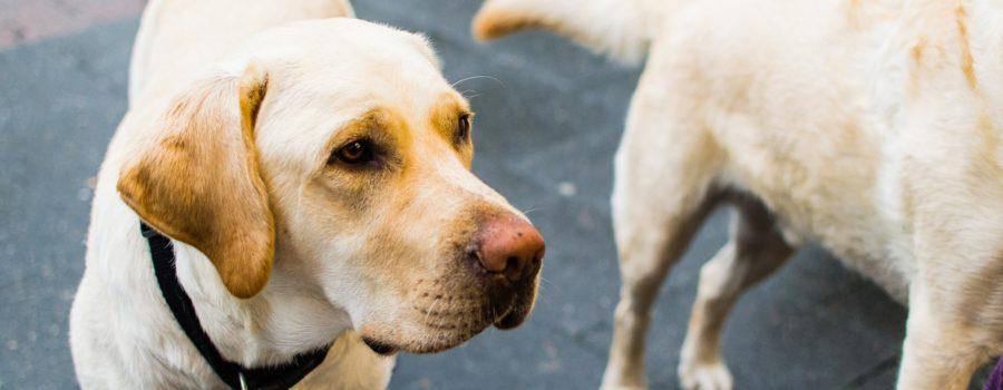 Srbiji treba bolji Zakon o dobrobiti životinja