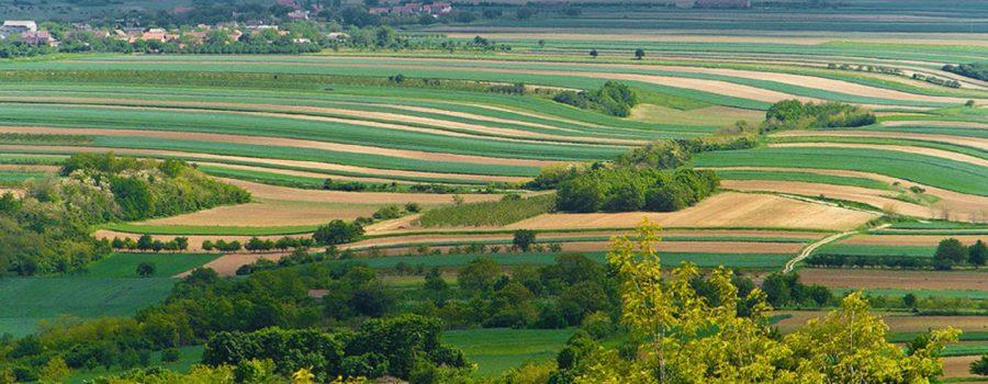 Blog: Vojvodini su potrebne nove šume