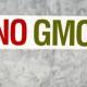 Blog: Svetska trgovinska organizacija i genetski modifikovani organizmi (GMO) – novi rebus za Srbiju!
