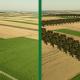 Blog: Povećanje pošumljenosti kroz vetrozaštitne pojaseve