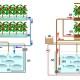 Blog: Akvaponika – intenzivna organska proizvodnja