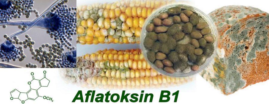 Blog: Talasanje oko aflatoksina