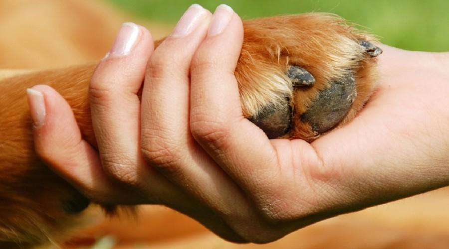 Dan ljudskih prava i Dan prava životinja