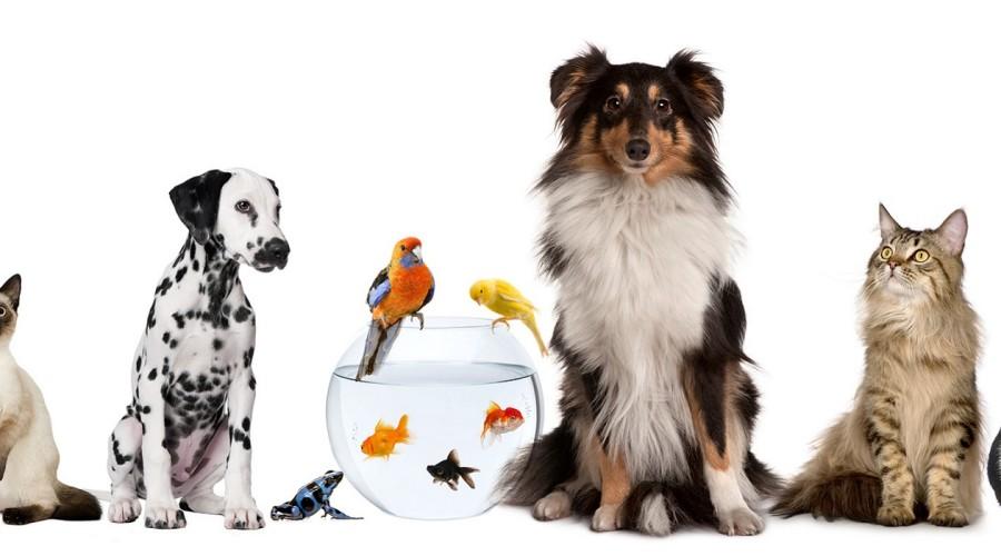 Blog: Politika i dobrobit životinja
