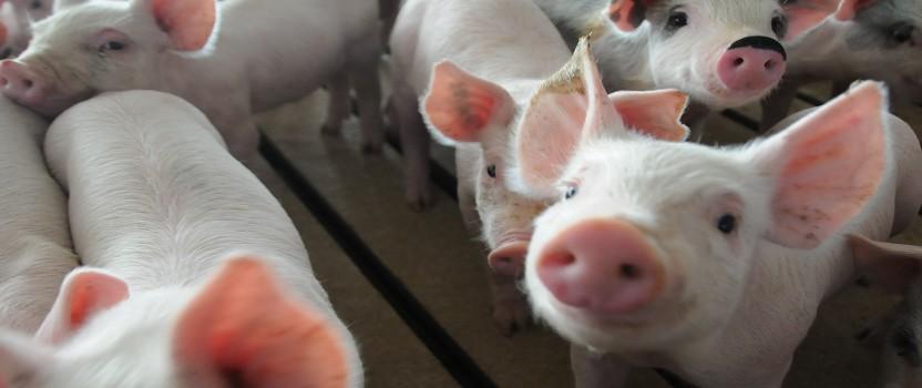 Blog: Dobrobit životinja kao agregat u problematici klimatskih promena