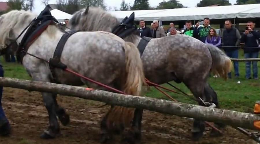 Blog: Štraparijada – zabavno svima osim konjima
