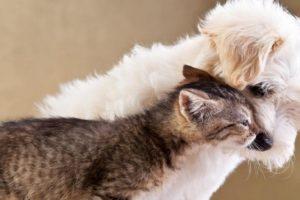 Blog: Prava životinja ili dobrobit životinja?