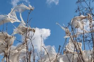 Blog: Plastika fantastika