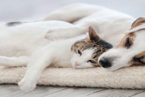 4. oktobar – Svetski dan životinja