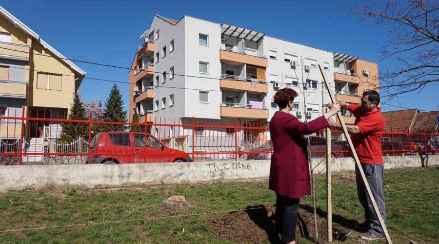Obrenovac (3)