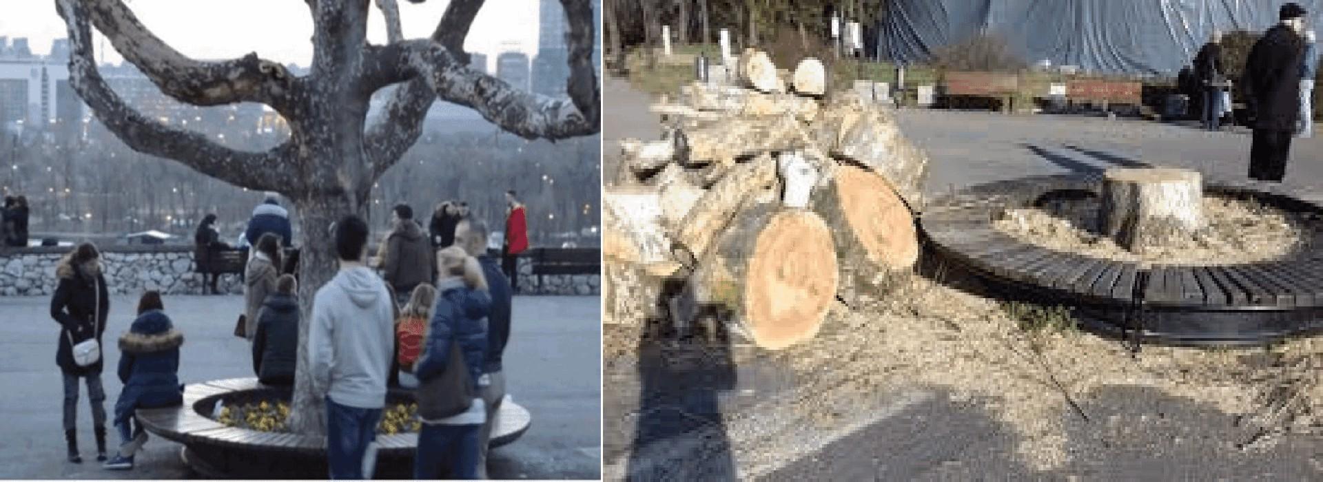 Seča drveća