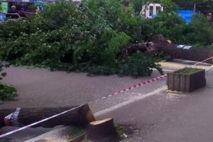 Vlasti u srpskim opštinama  imaju patološki strah od drveća