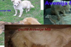 Blog: Zelena stranka pita – Ko u Srbiji ubija pse o trošku građana?