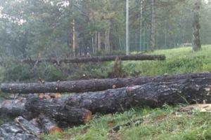 Masakr drveća u Košutnjaku