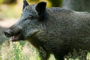 Zelena stranka i udruženja za zaštitu životinja zahtevaju odgovore