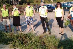 Zelene brigade u borbi protiv ambrozije