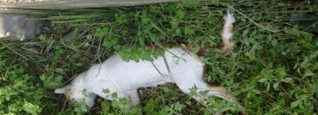 Ubijena mačka