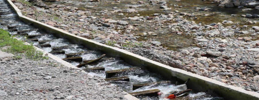 Zahtevamo HITNU INTERVENCIJU I POMOĆ ugroženom živom svetu u rekama zarobljenim u cevima i OBUSTAVU dalje izgradnje malih hidroelektrana