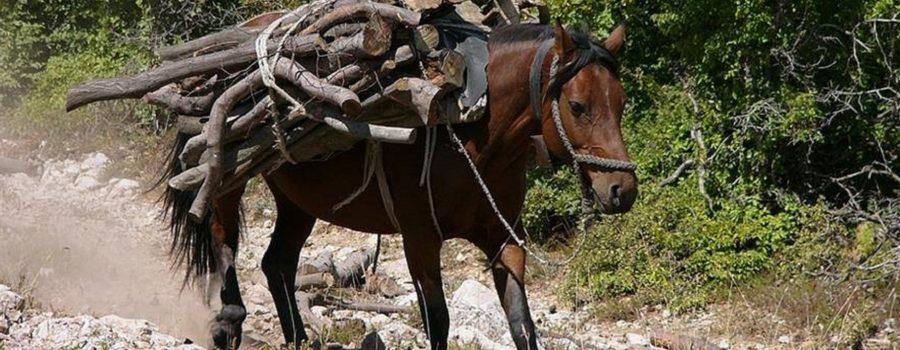 Zaštita životinja uz poštovanje zakona, a ne silom