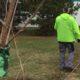 Zelena stranka u Zrenjaninu počela akciju sadnje 5.000 stabala novog drveća