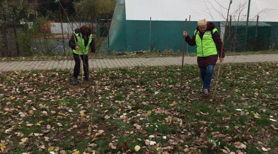 Zrenjanin sadnja drveća (1)